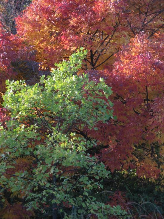 burnaby autumn colors