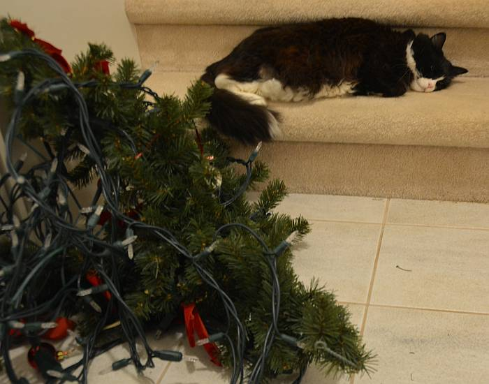 cat mourns Christmas