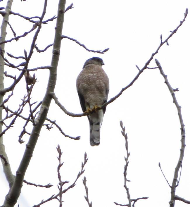 Fraser Foreshore Birding