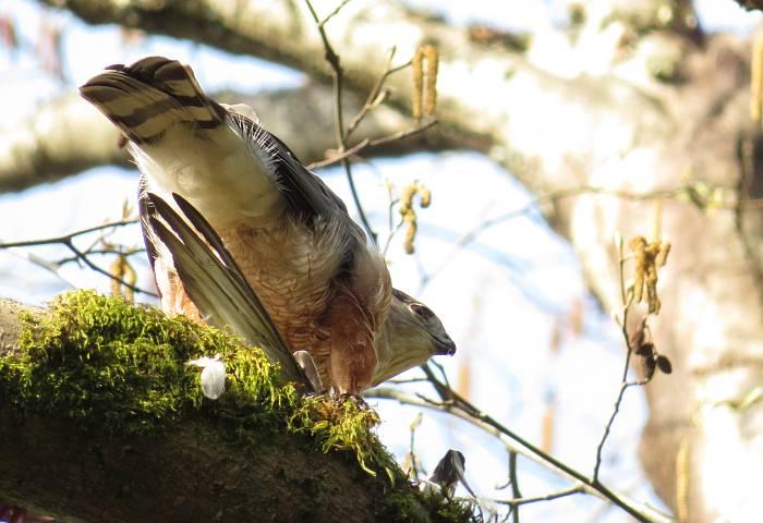 Byrne Creek raptors