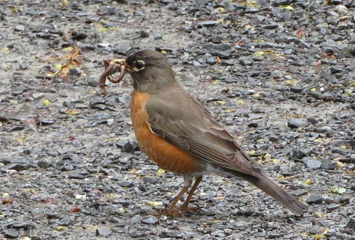 robin worm byrne creek burnaby
