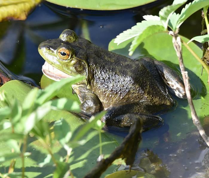 frog deer lake burnaby