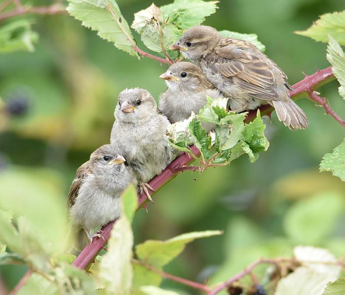 cute little brown birds