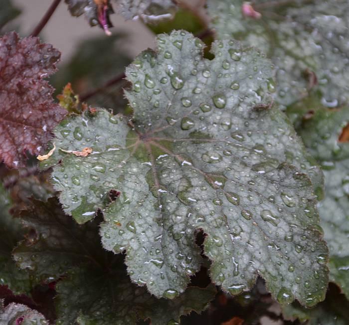 plants rain burnaby bc