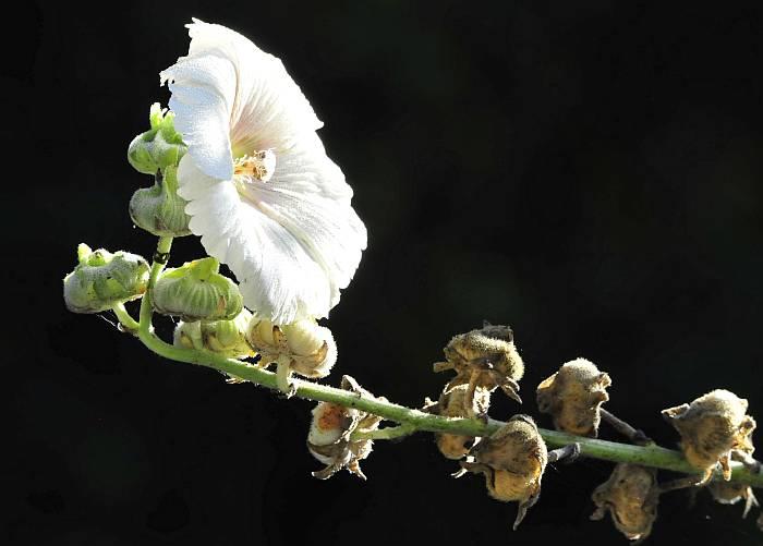 Burnaby Lake flower sidelight