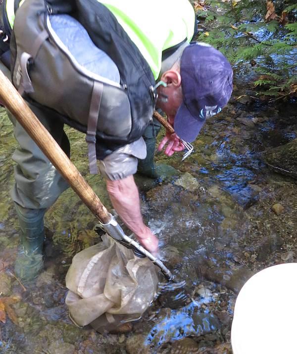 bug count byrne creek