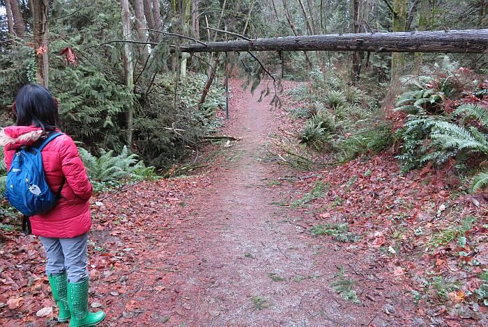 windfall tree Byrne trail