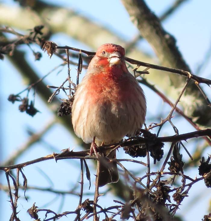 south surrey birds