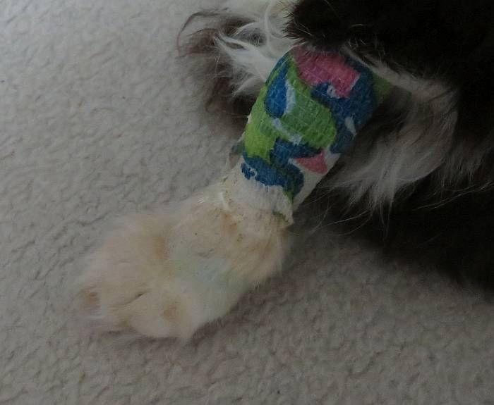choco iv bandage