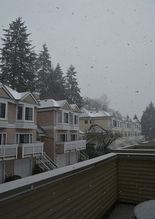 snow falling south burnaby bc