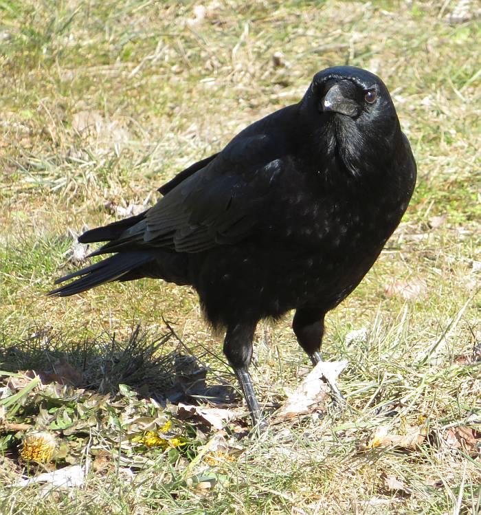 birds fraser foreshore burnaby
