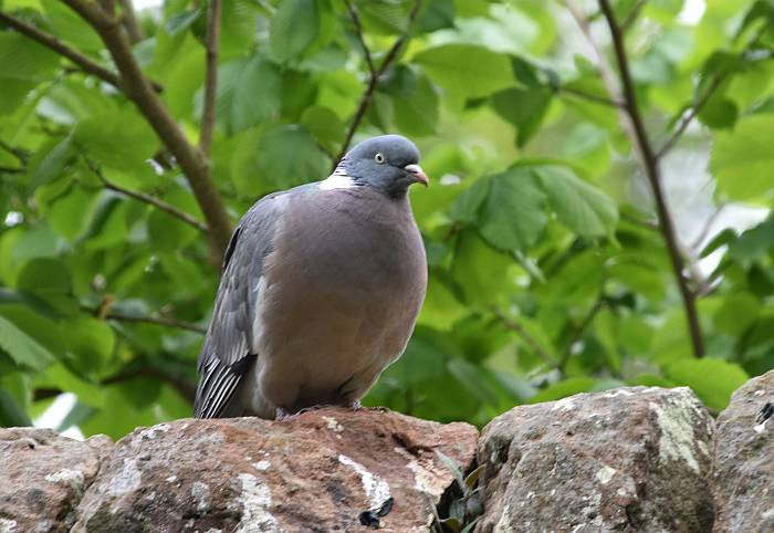 duddington lock edinburgh church garden birds