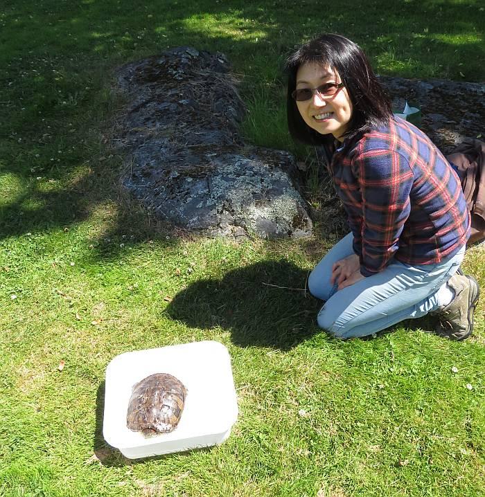 midori turtle victoria