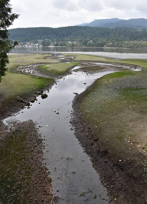Burrard Inlet Fish Fest Port Moody Mud Flats
