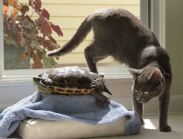 kitty sora turtle midori sunshine