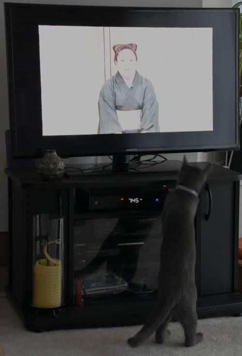 sora kitty tv animal sounds