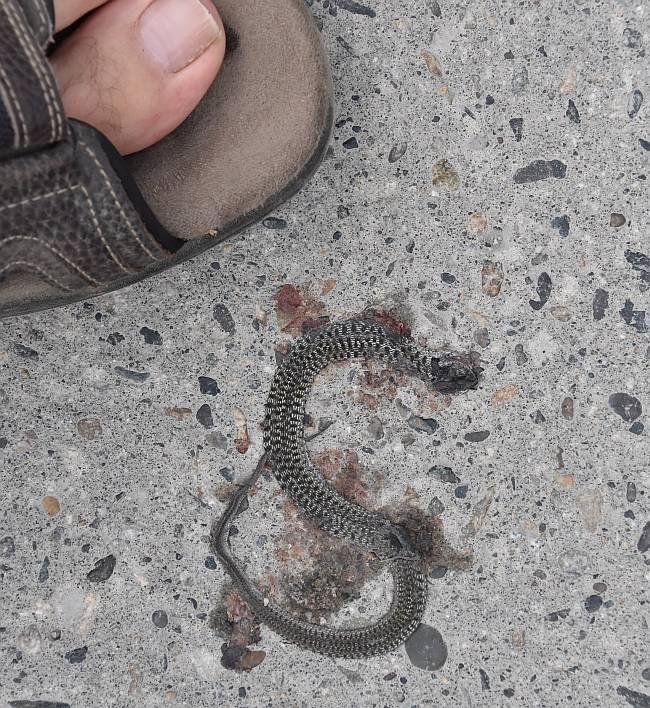 mashed snake