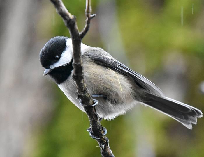 birds fraser foreshore park burnaby
