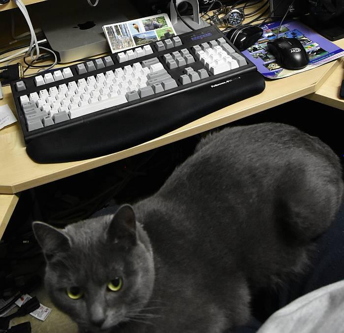 kitty sora at keyboard