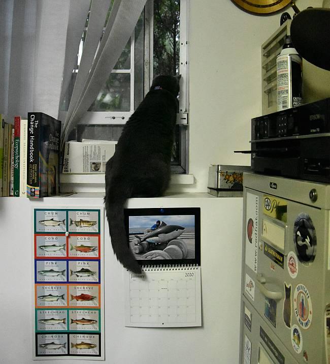 sora cat office window