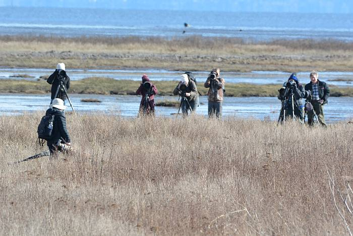 photographers boundary bay delta bc
