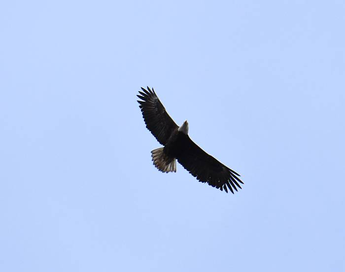 eagles soaring burnaby bc