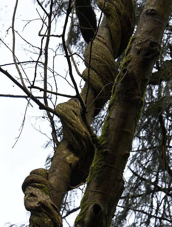 tree python byrne creek