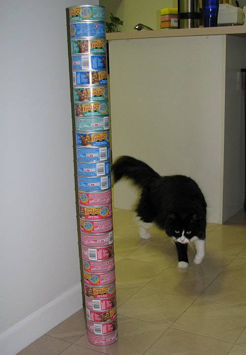 cat food tins