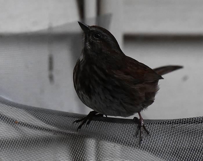sparrow burnaby bc