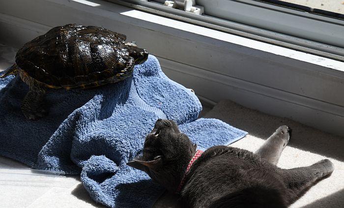 cat sora turtle midori