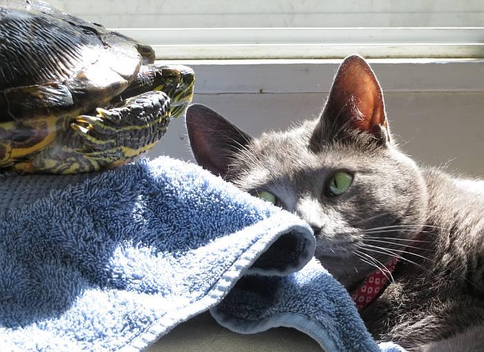 cat turtle sunning