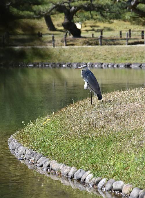 Heron Ritsurin Park Takamatsu Japan