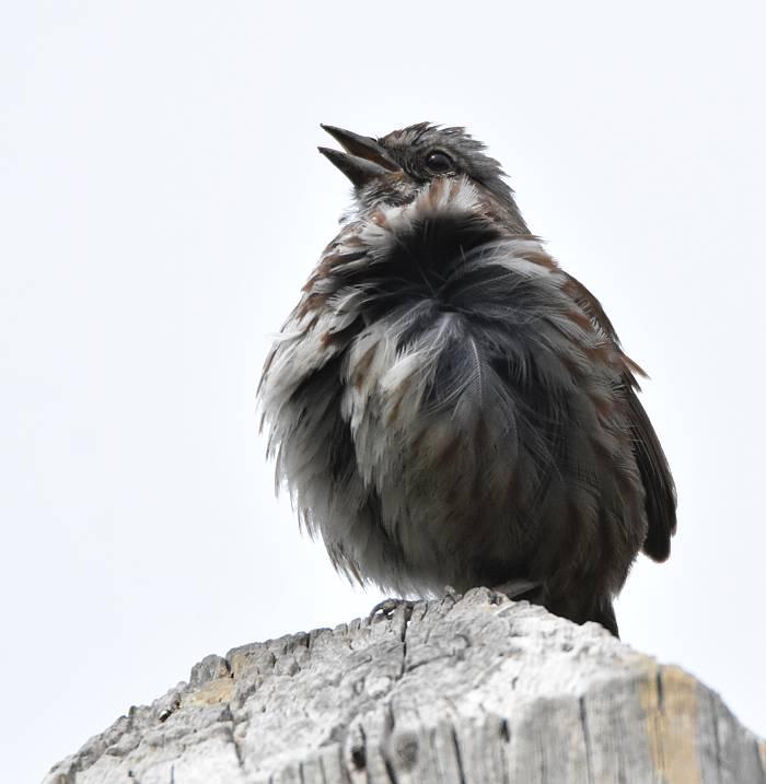 birds beasts burnaby bc