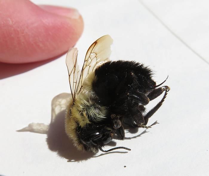 dead bee burnaby bc