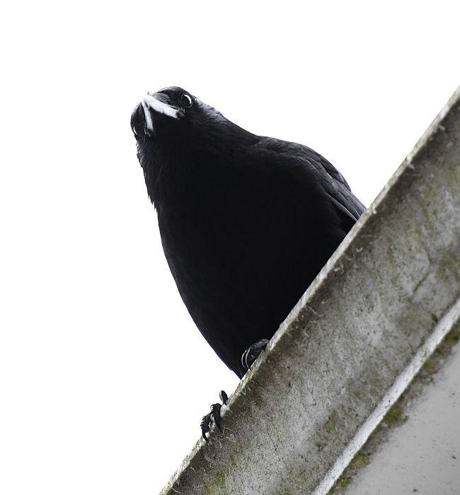 crow burnaby bc