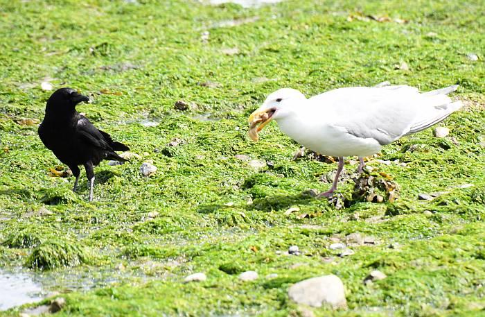 gulls dining seafood spanish banks vancouver