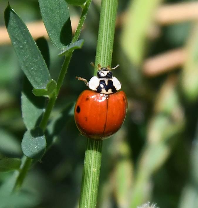 ladybug fraser foreshore park burnaby bc