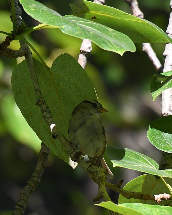 sparrow fraser foreshore park burnaby