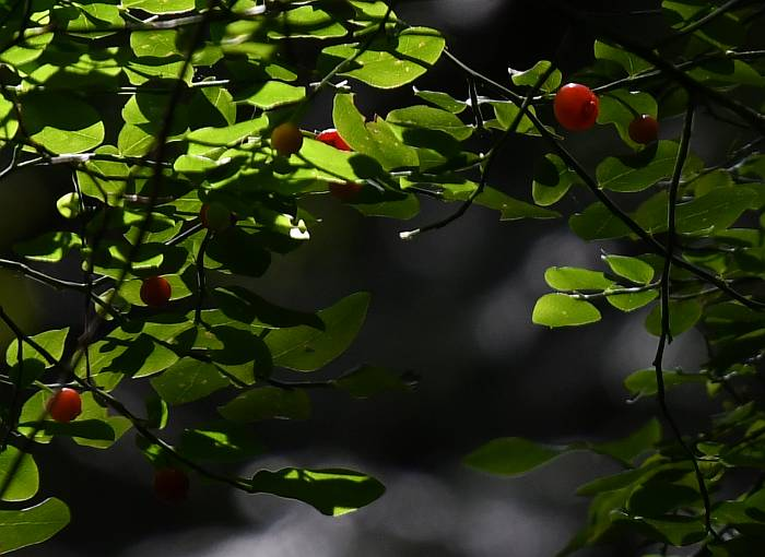 byrne creek flora burnaby bc