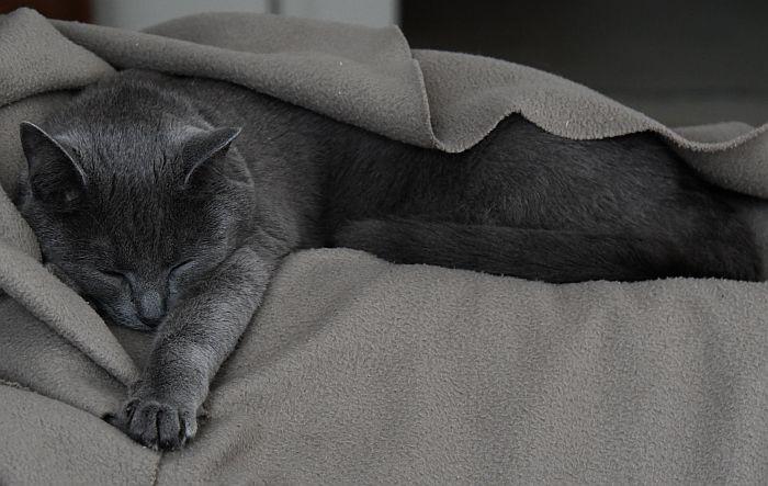 sleeping sora the cat
