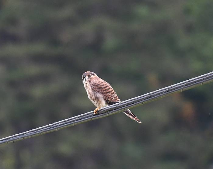 kestrel pemberton meadows road