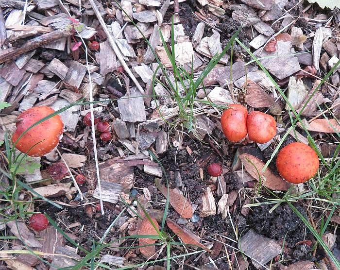mushrooms byrne creek burnaby bc