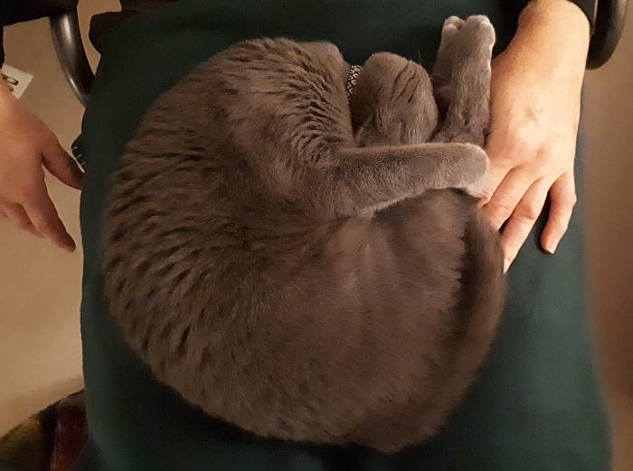 sora cat diving form