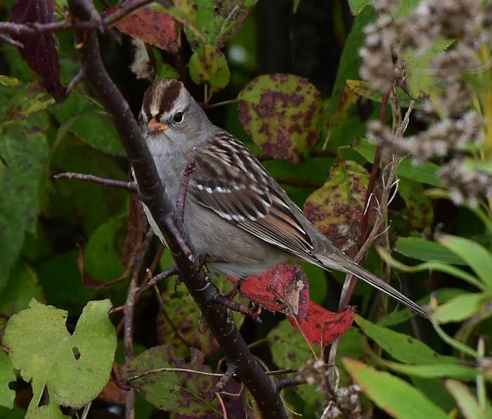 sparrows garry point park steveston bc