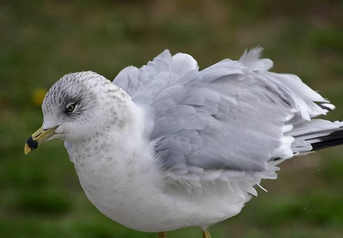 gull garry point park steveston bc