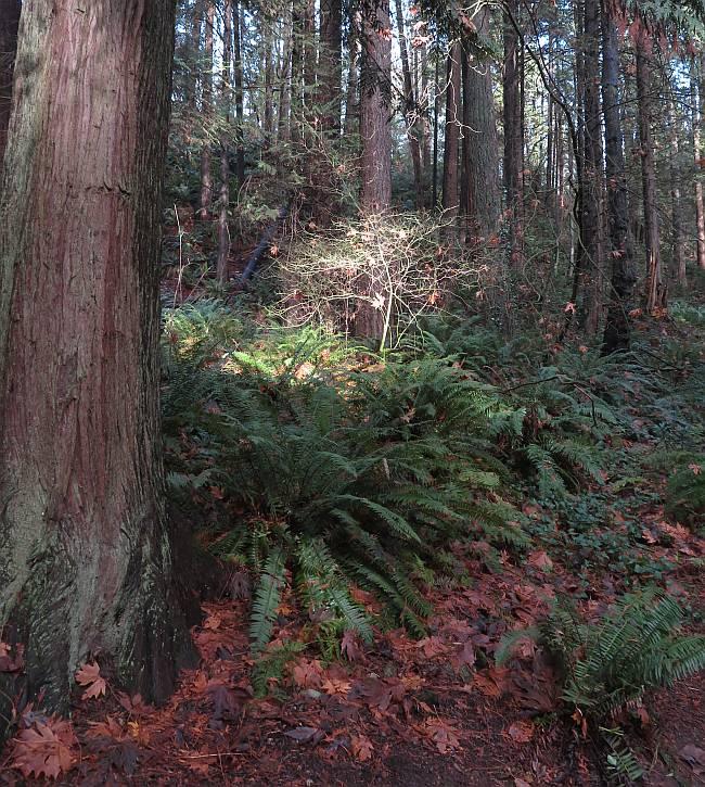 fungi ferns byrne creek burnaby bc