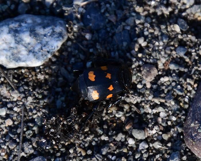 beetle centennial beach delta bc