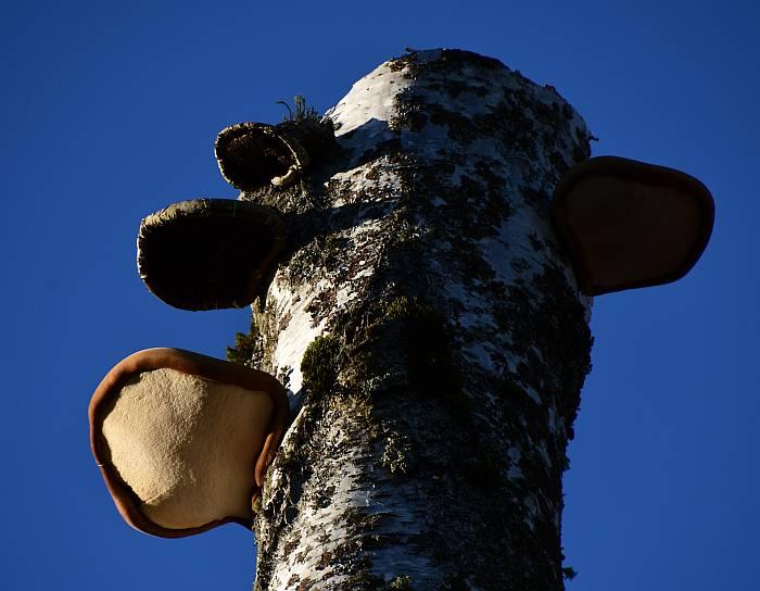 fungi deer lake burnaby bc
