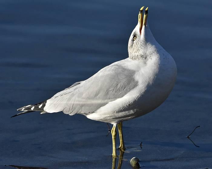 gull deer lake burnaby bc