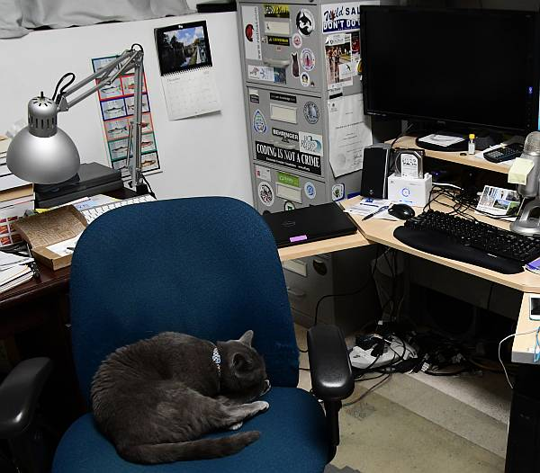 sora cat steals office chair